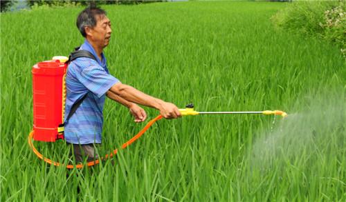 胡正云在按技术要求在水稻田喷药_副本.jpg